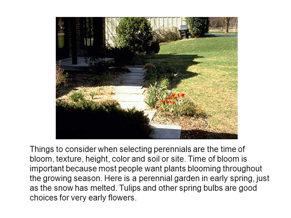 Things to consider when selecting perennials are the time of bloom, texture, height, color and soil or site.