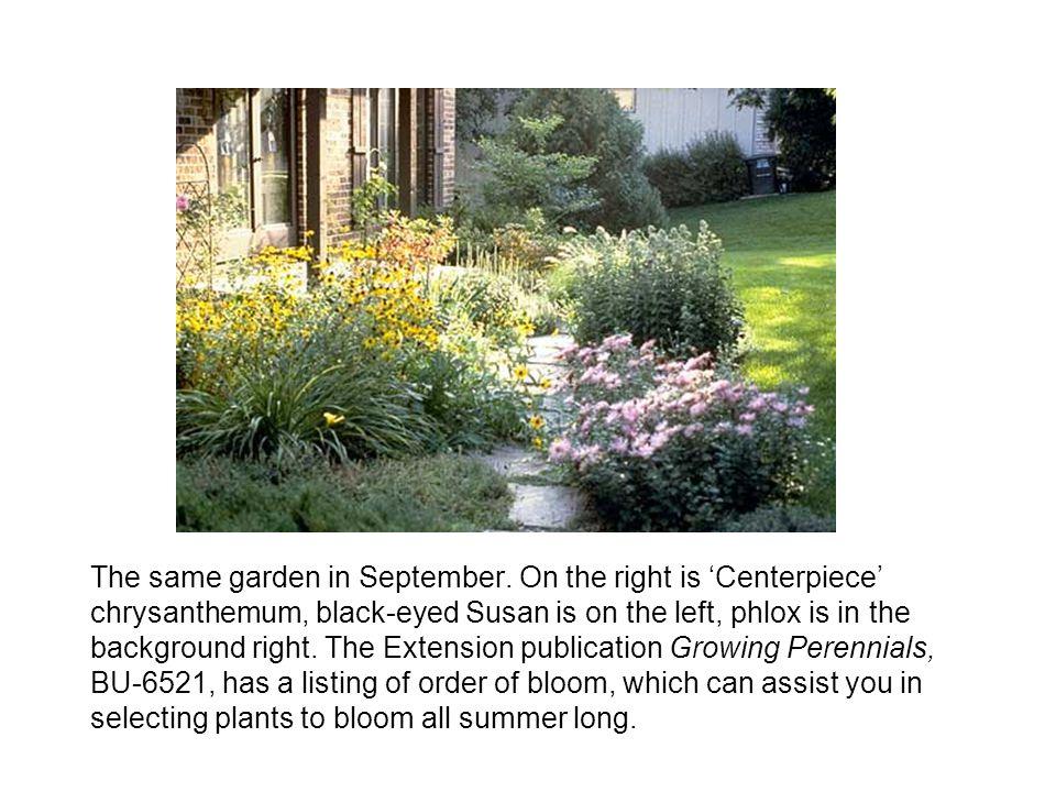 The same garden in September