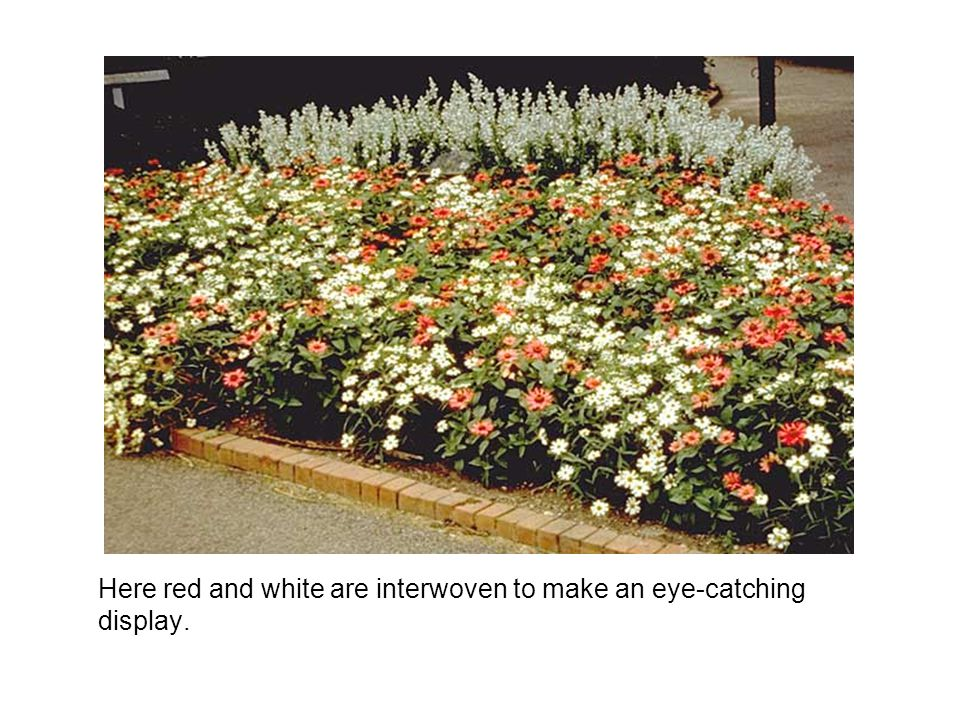 Here red and white are interwoven to make an eye-catching display.