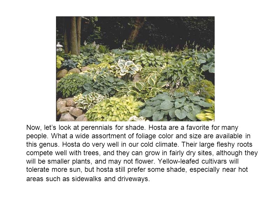 Now, let's look at perennials for shade