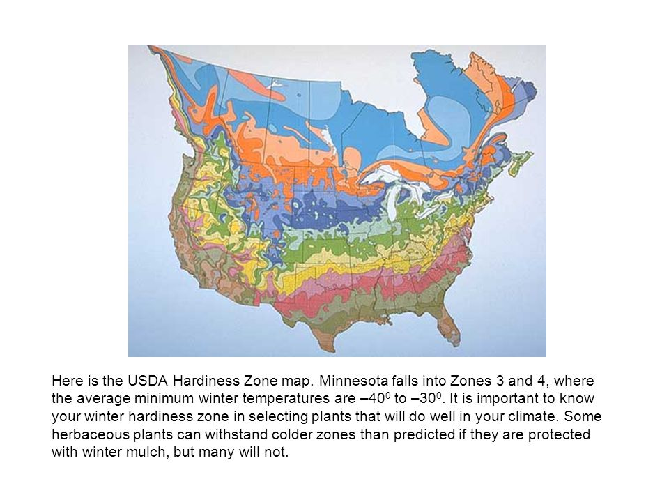 Here is the USDA Hardiness Zone map