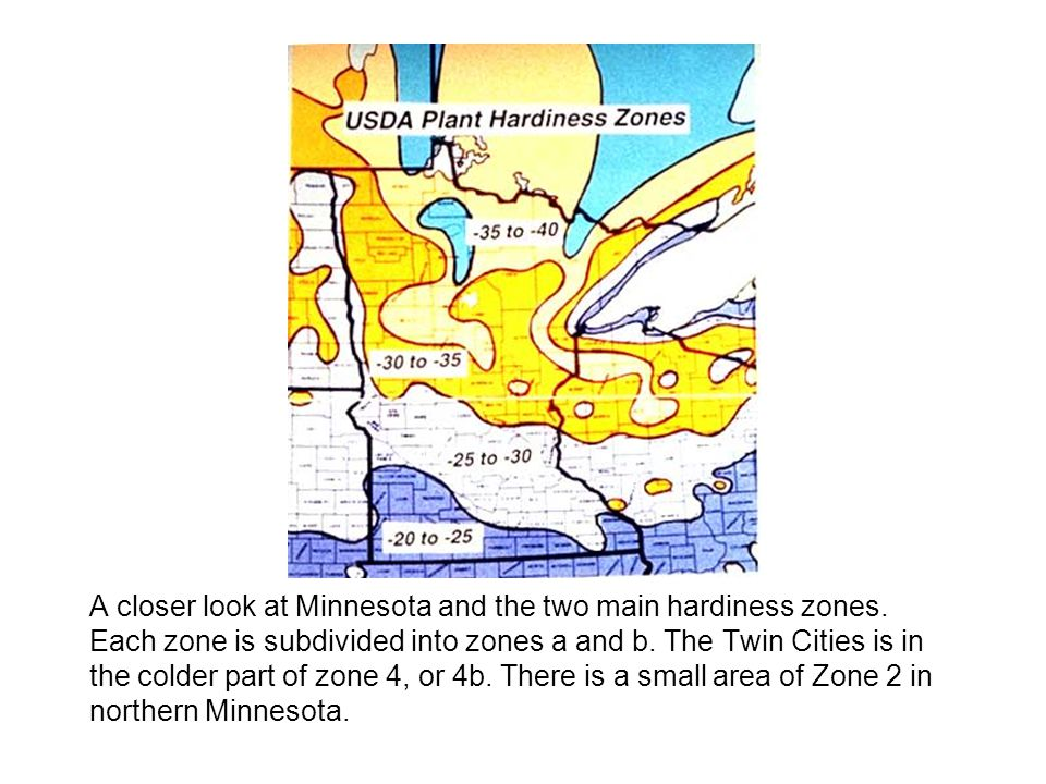 A closer look at Minnesota and the two main hardiness zones