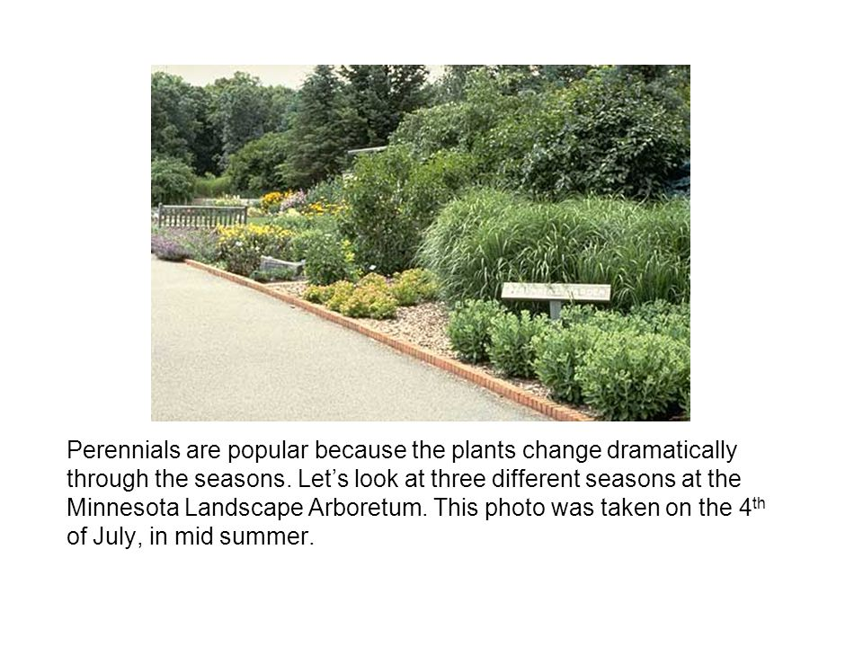 Perennials are popular because the plants change dramatically through the seasons.
