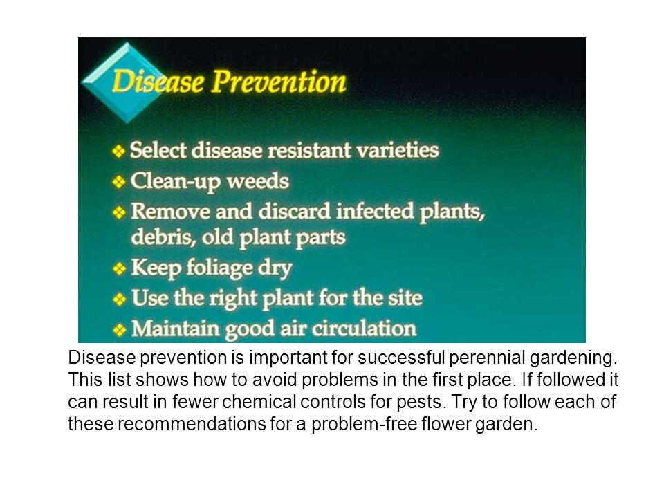 Disease prevention is important for successful perennial gardening