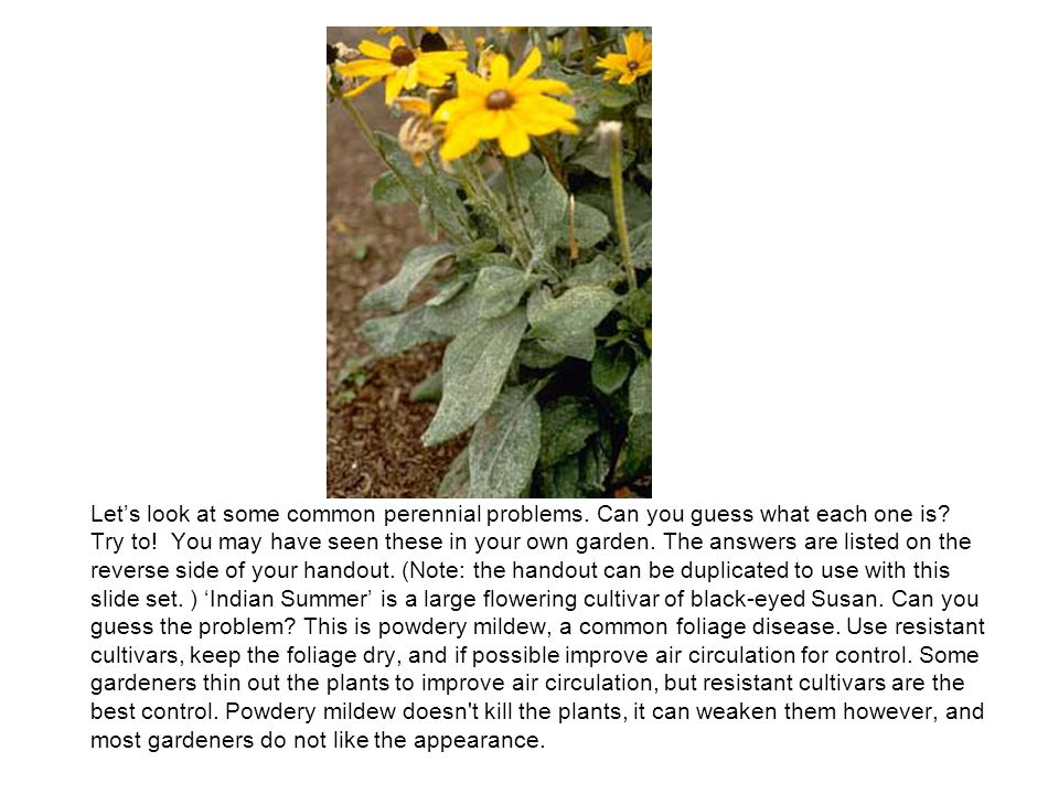 Let's look at some common perennial problems