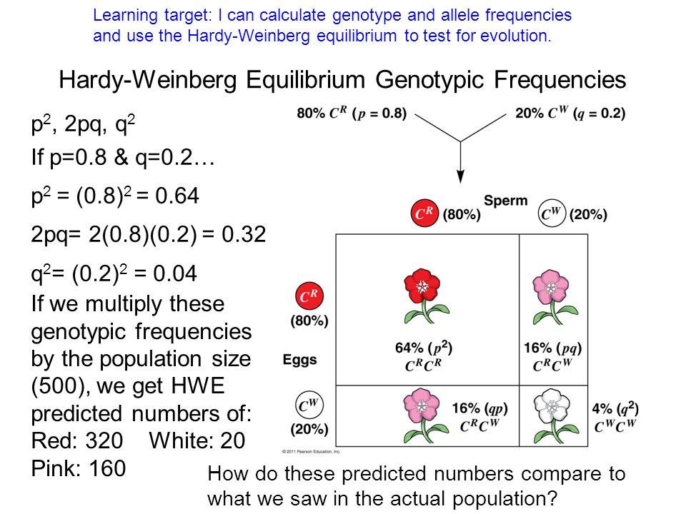 Hardy-Weinberg Equilibrium Genotypic Frequencies