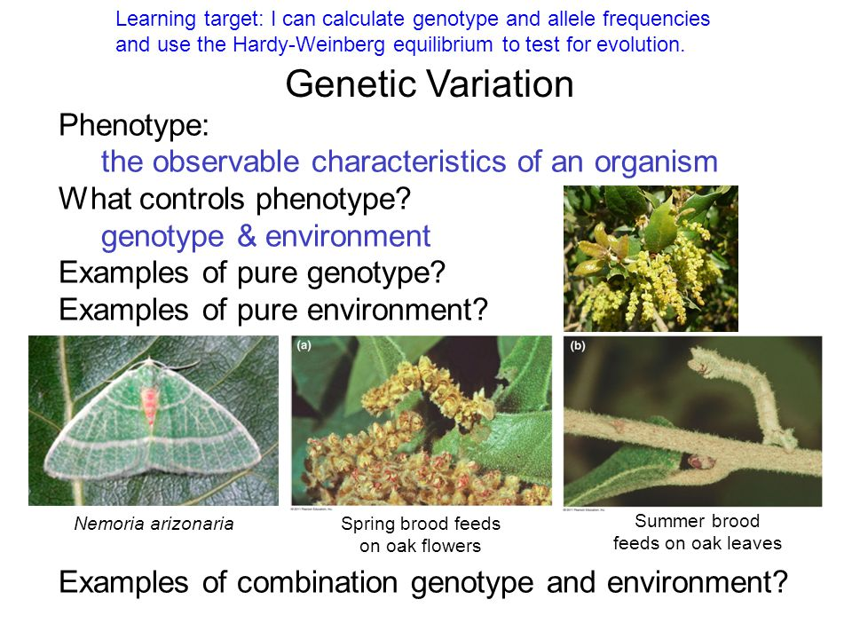 Genetic Variation Phenotype: