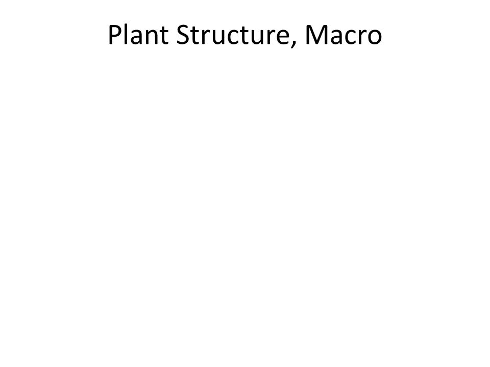 Plant Structure, Macro