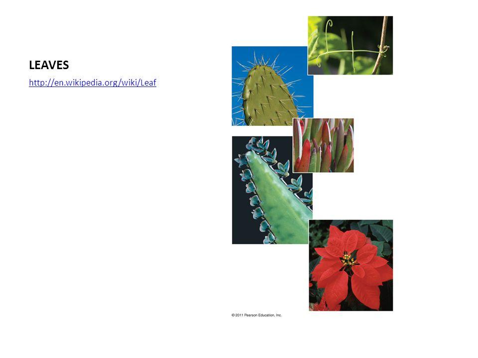 LEAVES http://en.wikipedia.org/wiki/Leaf
