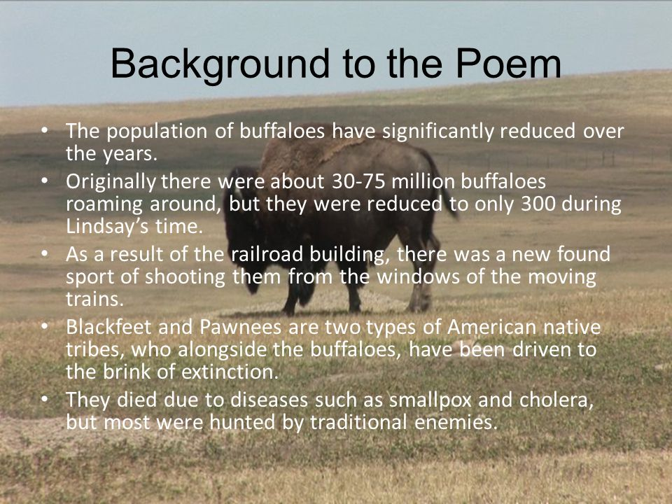 Background to the Poem The population of buffaloes have significantly reduced over the years.