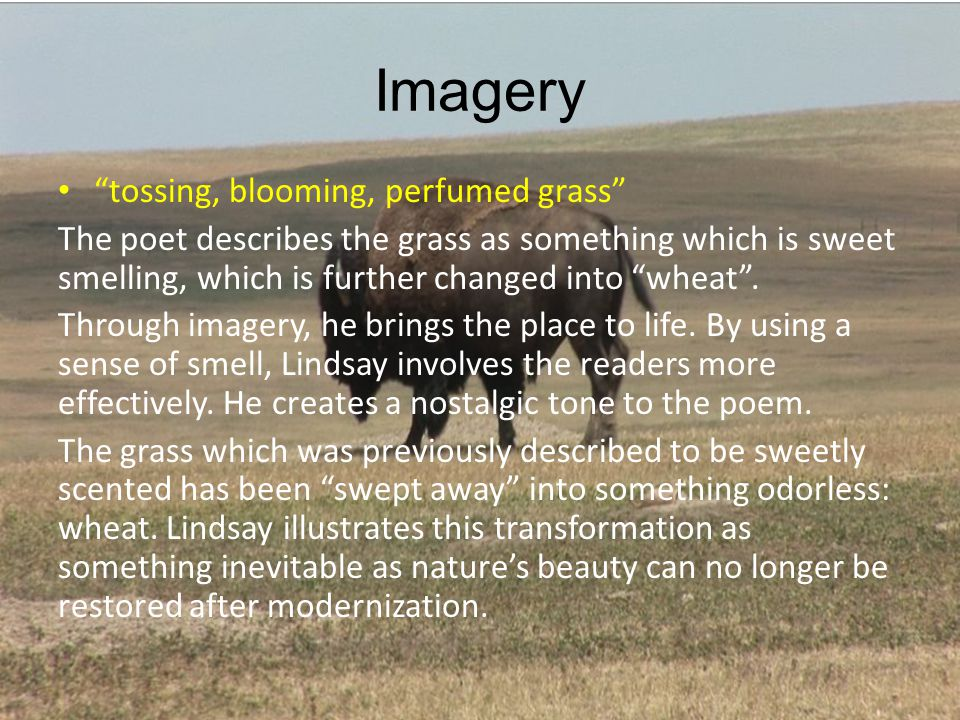 Imagery tossing, blooming, perfumed grass