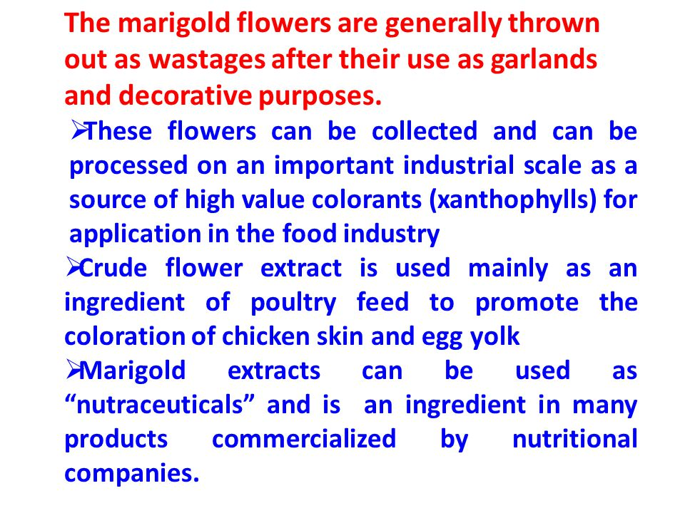 The marigold flowers are generally thrown out as wastages after their use as garlands and decorative purposes.