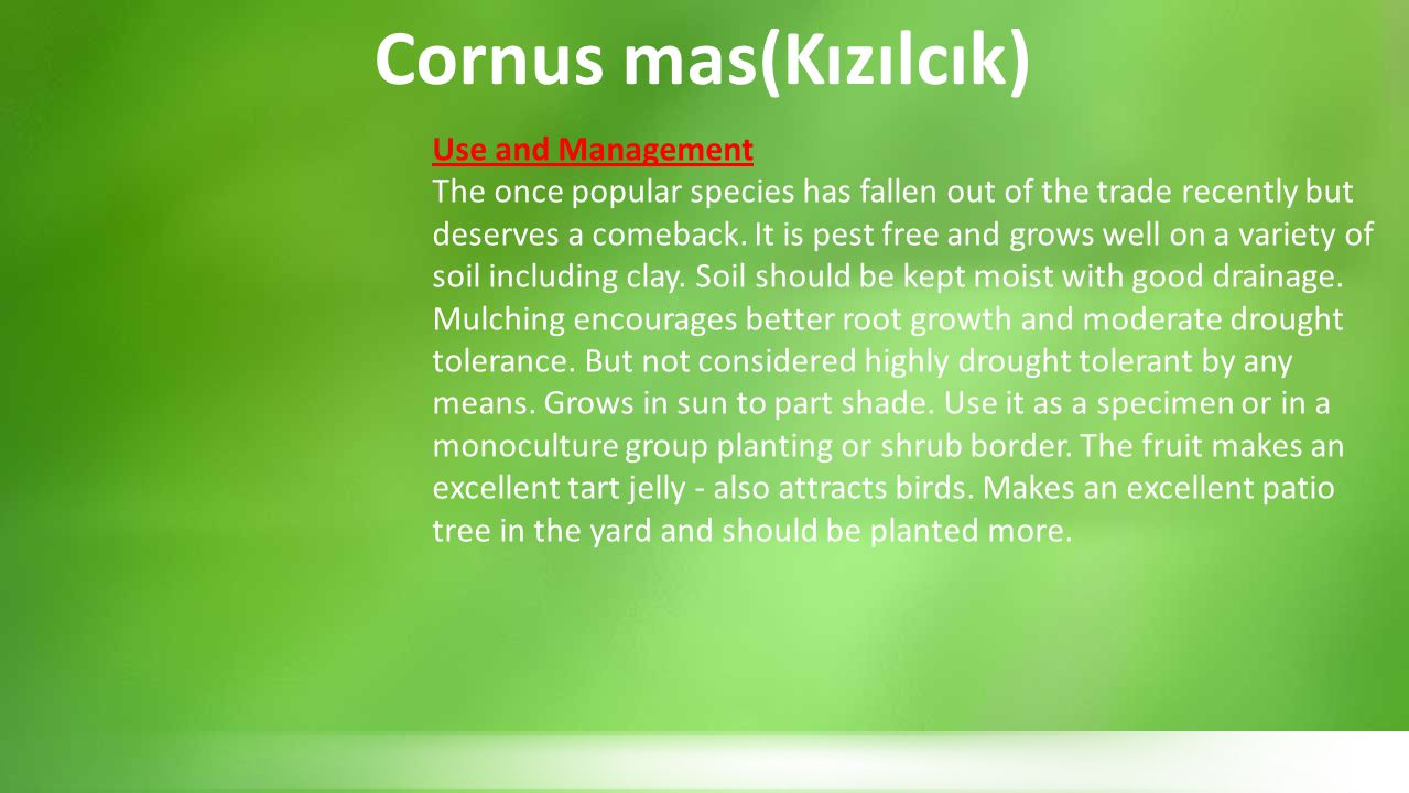 Cornus mas(Kızılcık) Use and Management