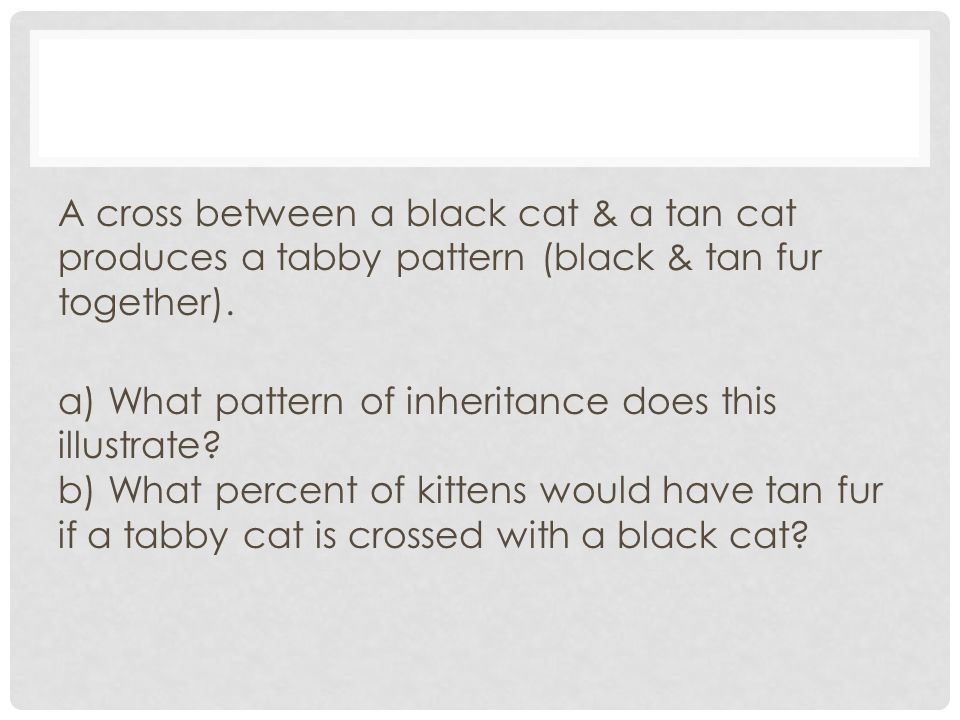 A cross between a black cat & a tan cat produces a tabby pattern (black & tan fur together).