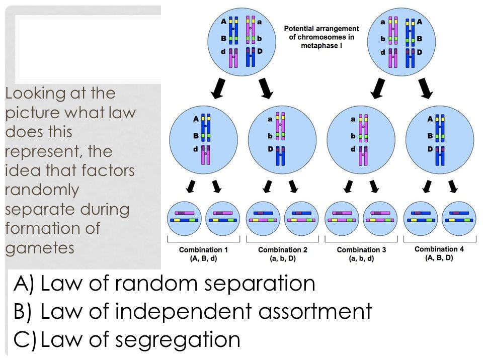 Law of random separation Law of independent assortment