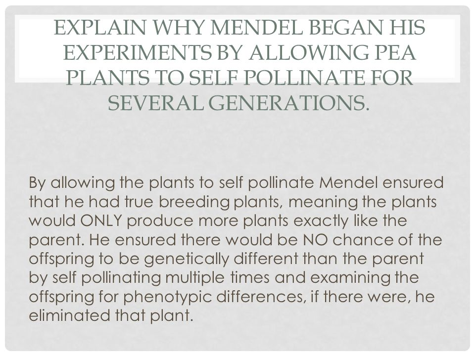Explain why Mendel began his experiments by allowing pea plants to self pollinate for several generations.