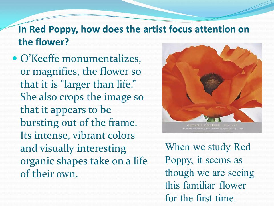In Red Poppy, how does the artist focus attention on the flower