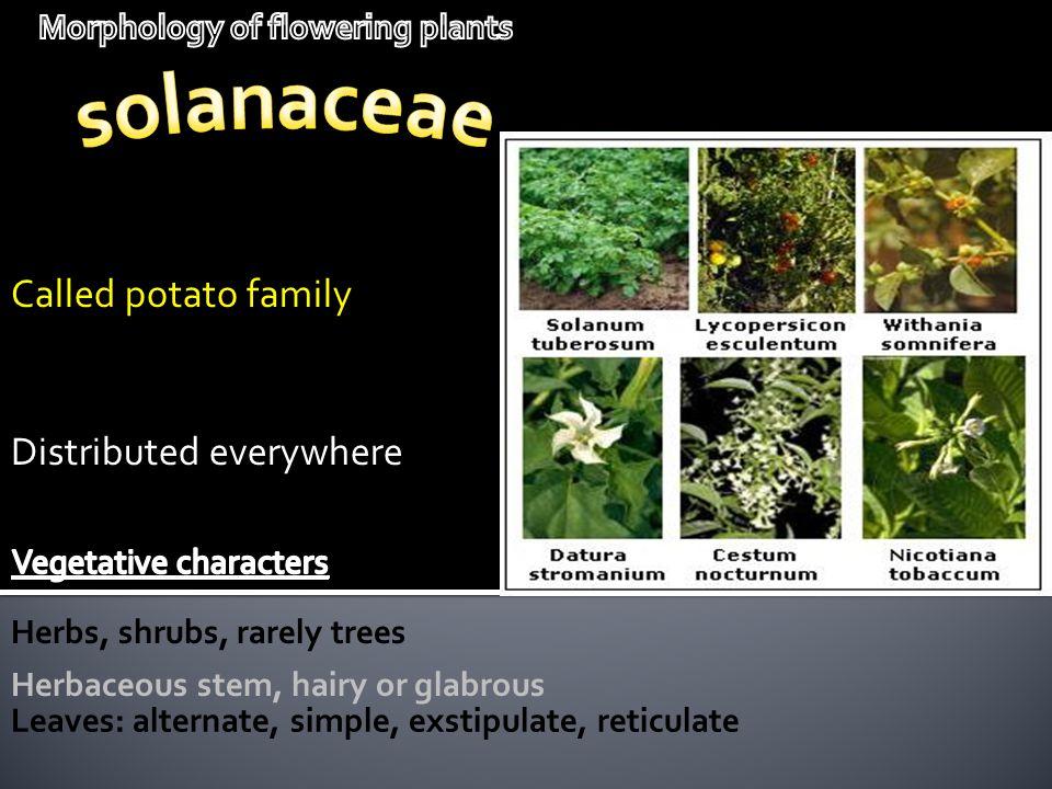 Morphology of flowering plants