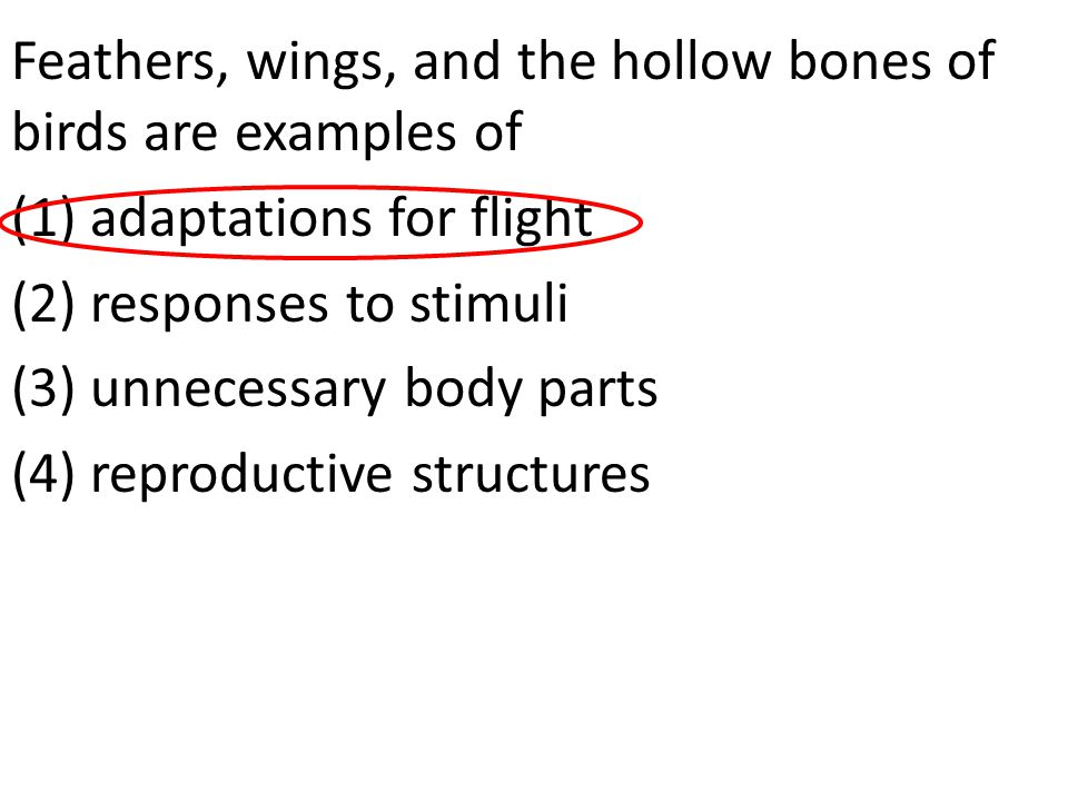 Feathers, wings, and the hollow bones of birds are examples of (1) adaptations for flight (2) responses to stimuli (3) unnecessary body parts (4) reproductive structures