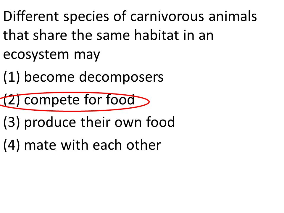 Different species of carnivorous animals that share the same habitat in an ecosystem may (1) become decomposers (2) compete for food (3) produce their own food (4) mate with each other