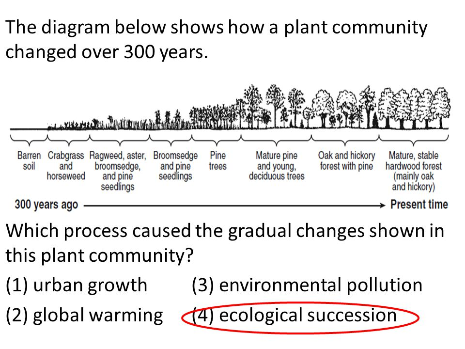 The diagram below shows how a plant community changed over 300 years