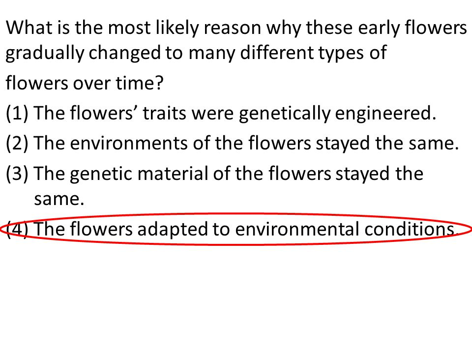 What is the most likely reason why these early flowers gradually changed to many different types of flowers over time.