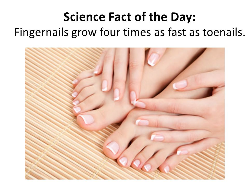Science Fact of the Day: Fingernails grow four times as fast as toenails.