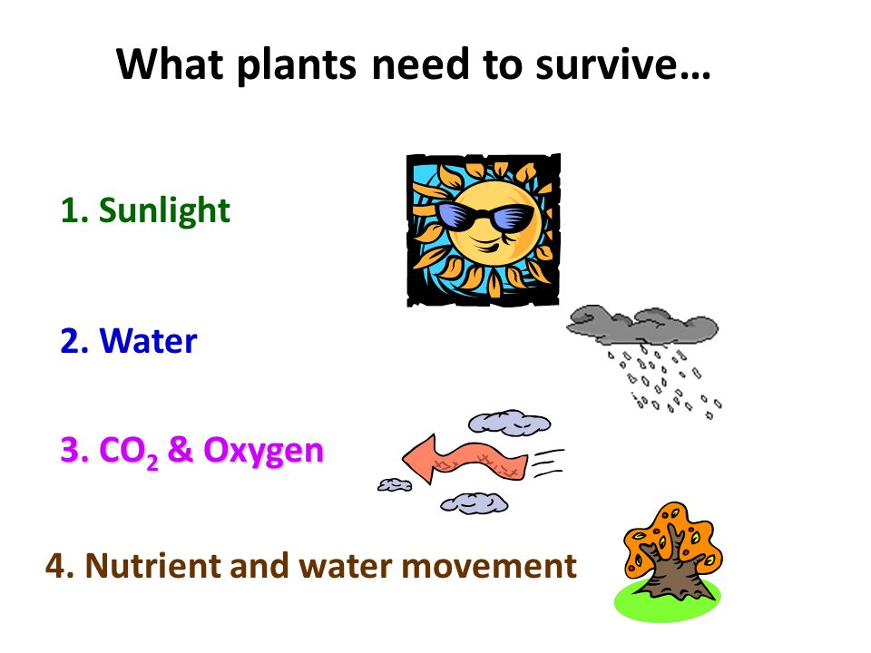 What plants need to survive…