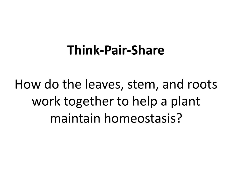 Think-Pair-Share How do the leaves, stem, and roots work together to help a plant maintain homeostasis