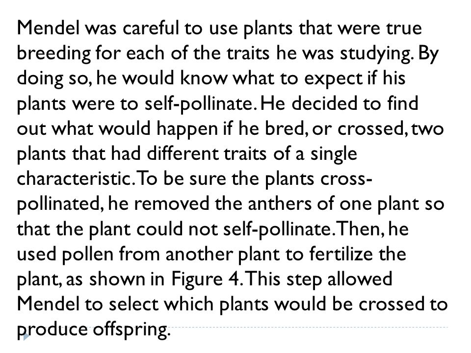 Mendel was careful to use plants that were true breeding for each of the traits he was studying.