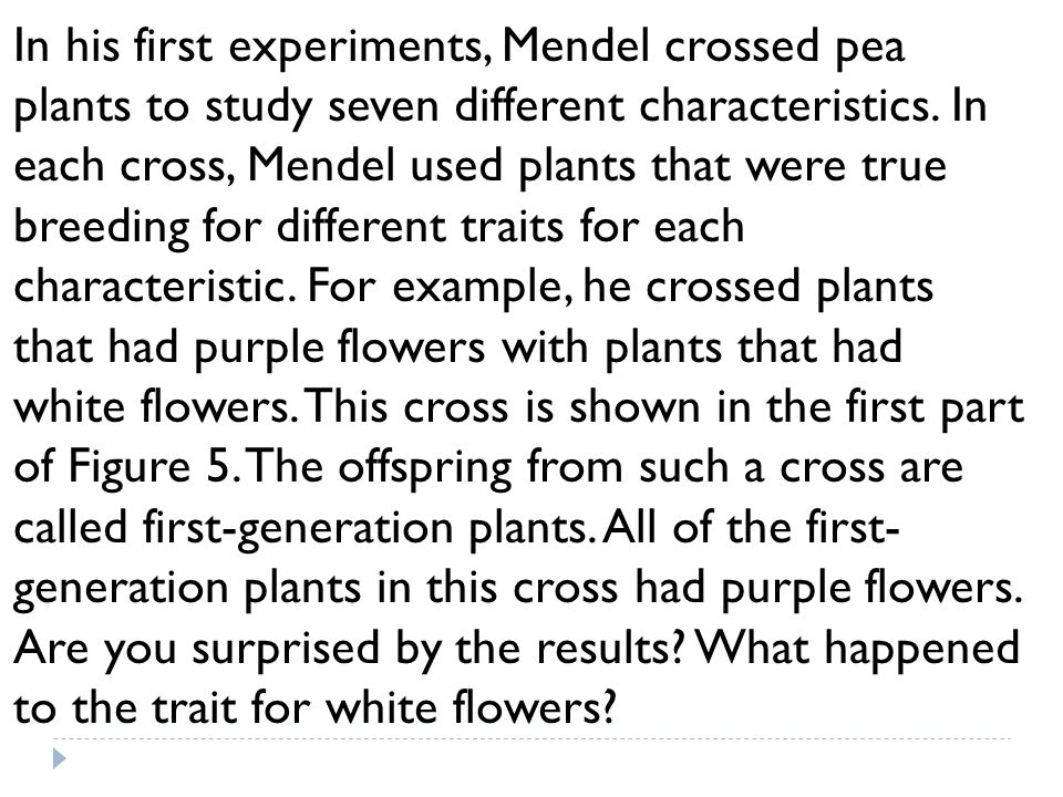In his first experiments, Mendel crossed pea plants to study seven different characteristics.