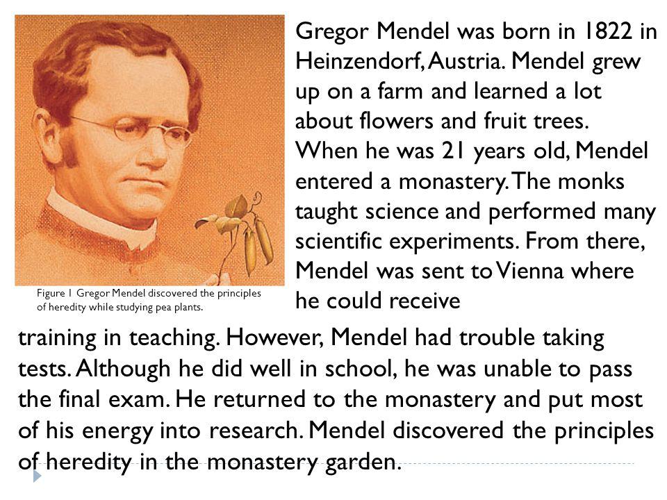 Gregor Mendel was born in 1822 in Heinzendorf, Austria