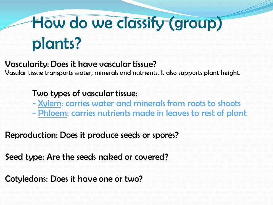 How do we classify (group) plants