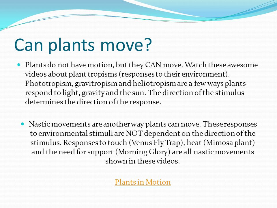 Can plants move