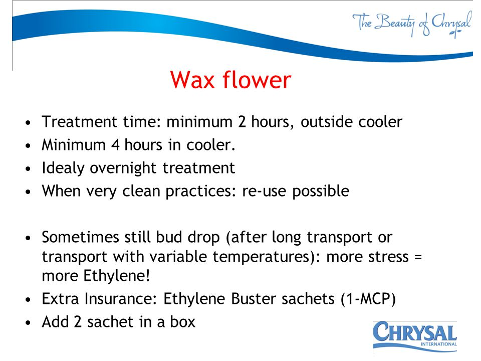 Wax flower Treatment time: minimum 2 hours, outside cooler