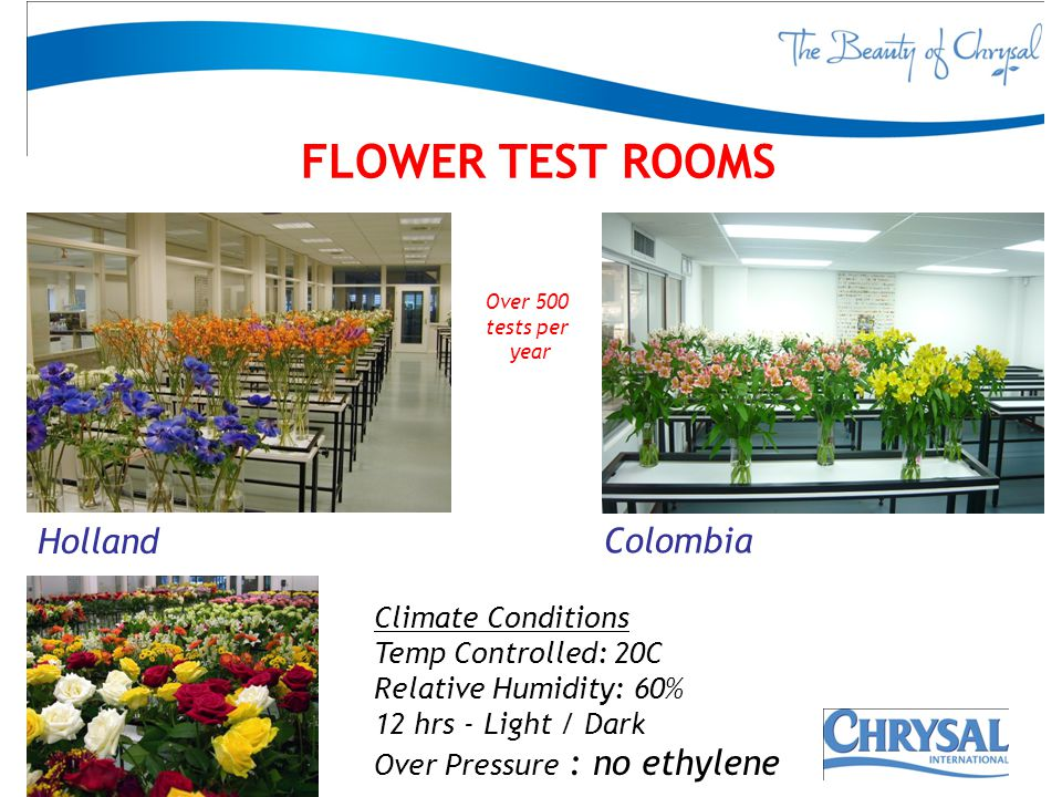 FLOWER TEST ROOMS Holland Colombia Climate Conditions