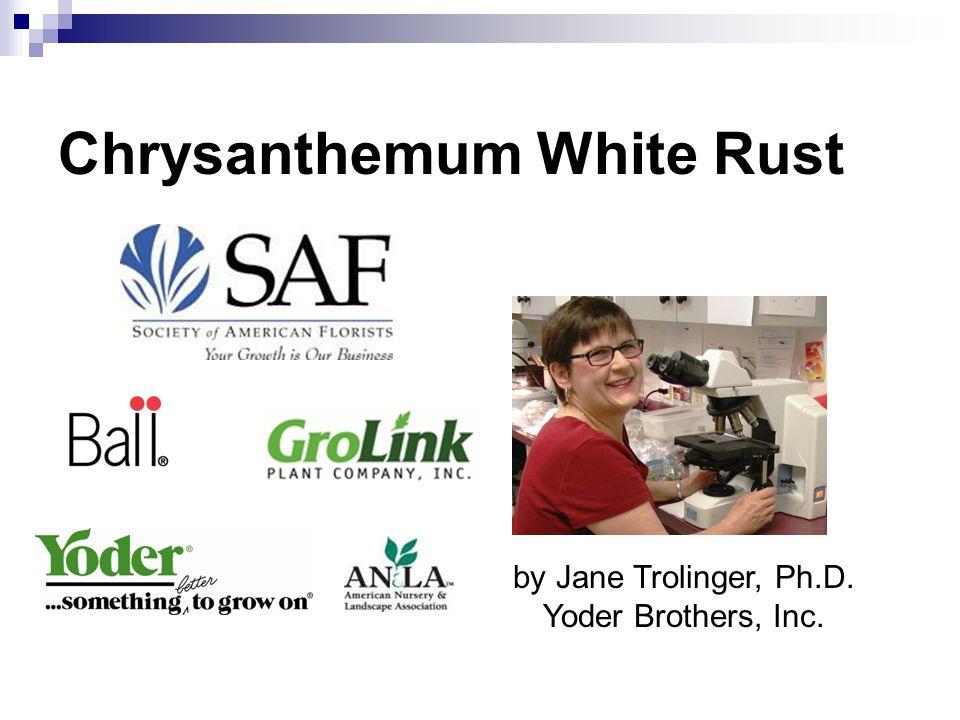 Chrysanthemum White Rust