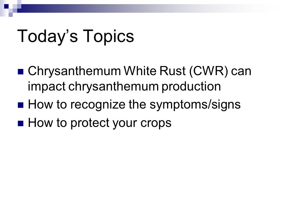 Today's Topics Chrysanthemum White Rust (CWR) can impact chrysanthemum production. How to recognize the symptoms/signs.
