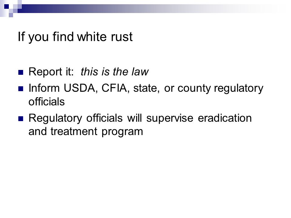 If you find white rust Report it: this is the law