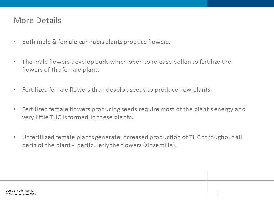 More Details Both male & female cannabis plants produce flowers.