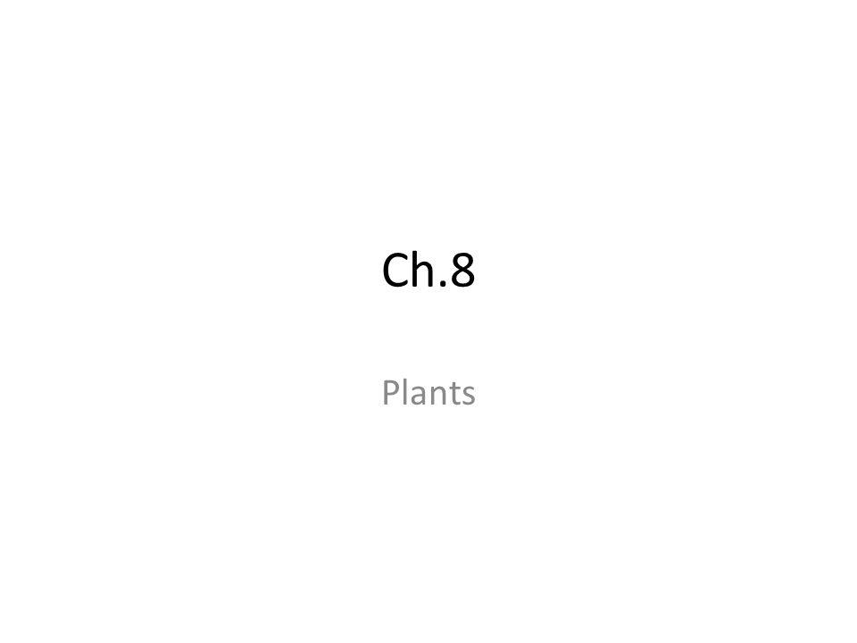 Ch.8 Plants