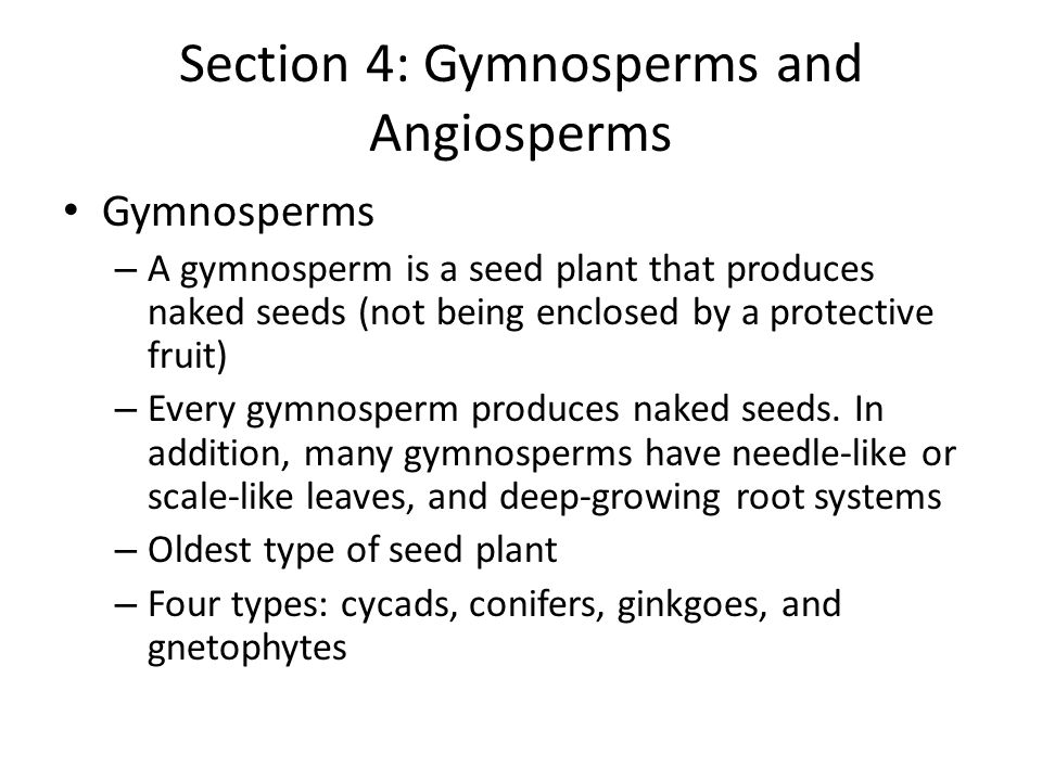 Section 4: Gymnosperms and Angiosperms