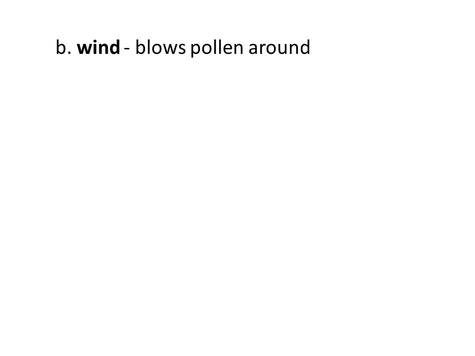 b. wind - blows pollen around