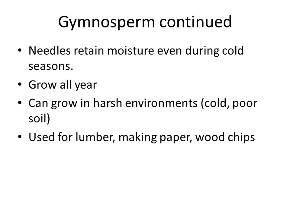 Gymnosperm continued Needles retain moisture even during cold seasons.