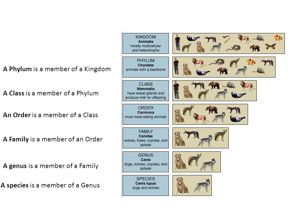 A Phylum is a member of a Kingdom