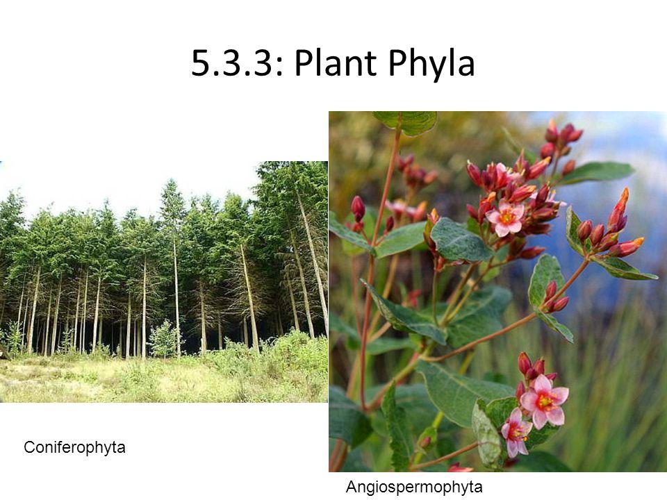 5.3.3: Plant Phyla Coniferophyta Angiospermophyta