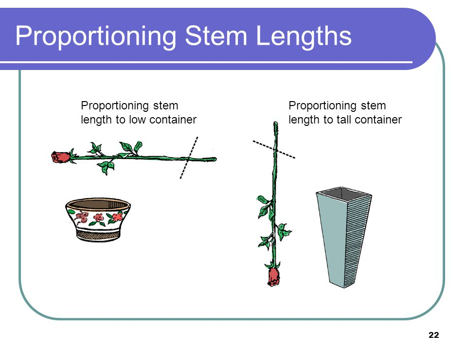 Proportioning Stem Lengths