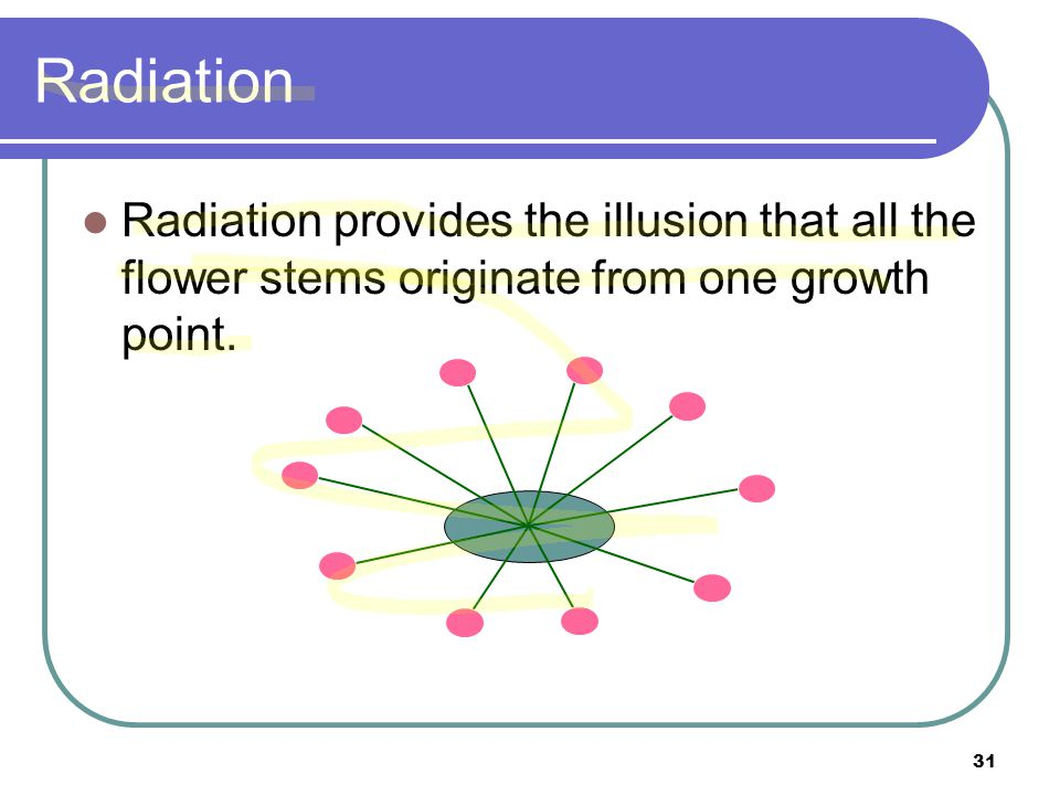 Radiation Radiation provides the illusion that all the flower stems originate from one growth point.