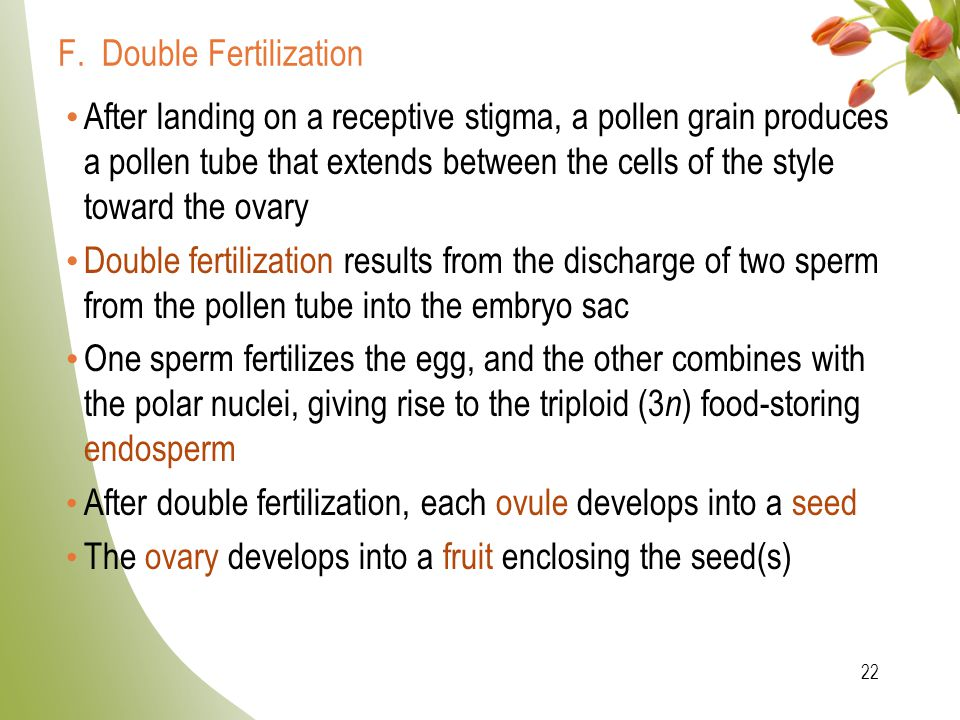 F. Double Fertilization