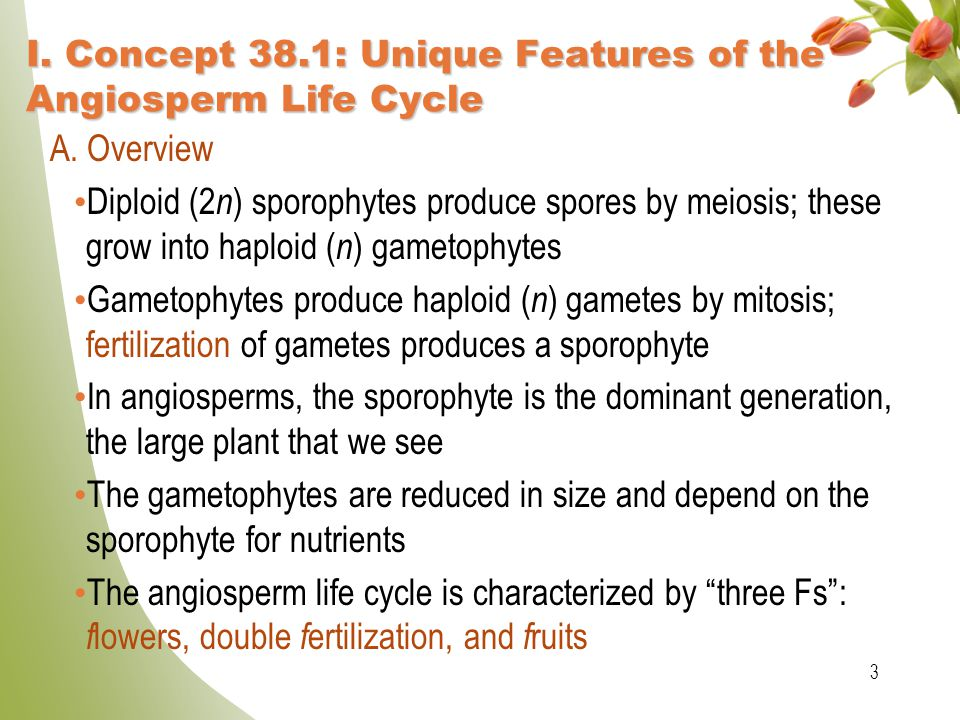 I. Concept 38.1: Unique Features of the Angiosperm Life Cycle
